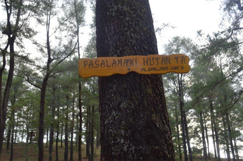 hutan-pinus-makassar