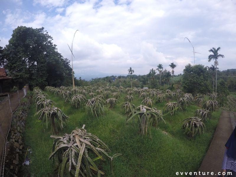 warso-farm