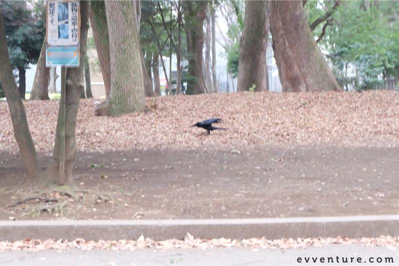 ueno-park-narita 2